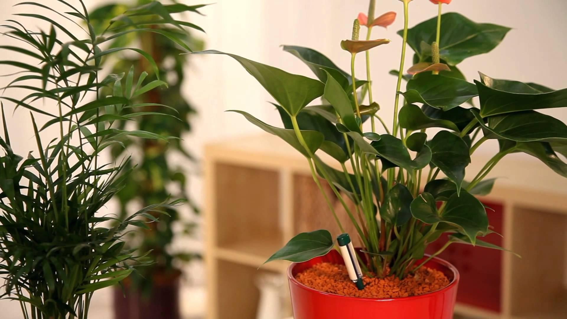 comment rempoter une plante verte. Black Bedroom Furniture Sets. Home Design Ideas